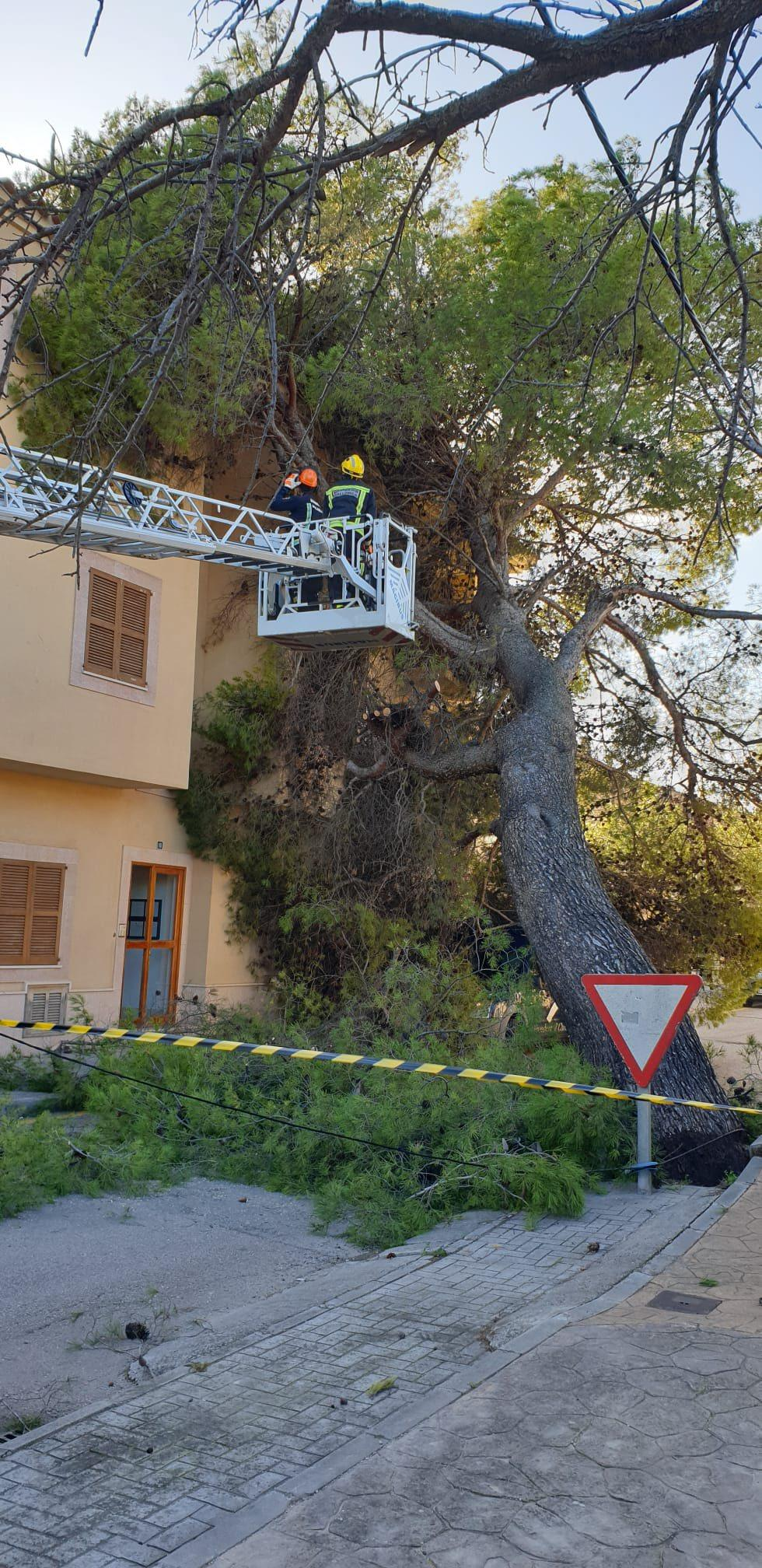Storm damage Consell