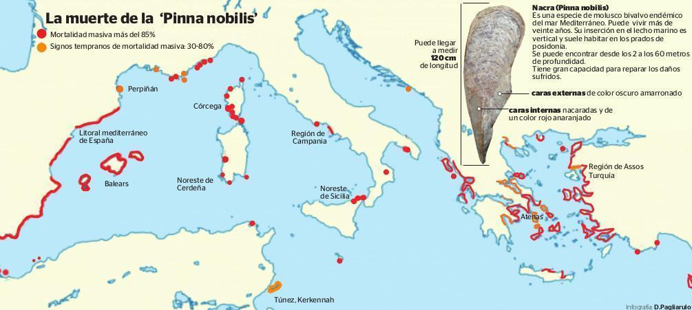 Mortality map for the nacra mollusc
