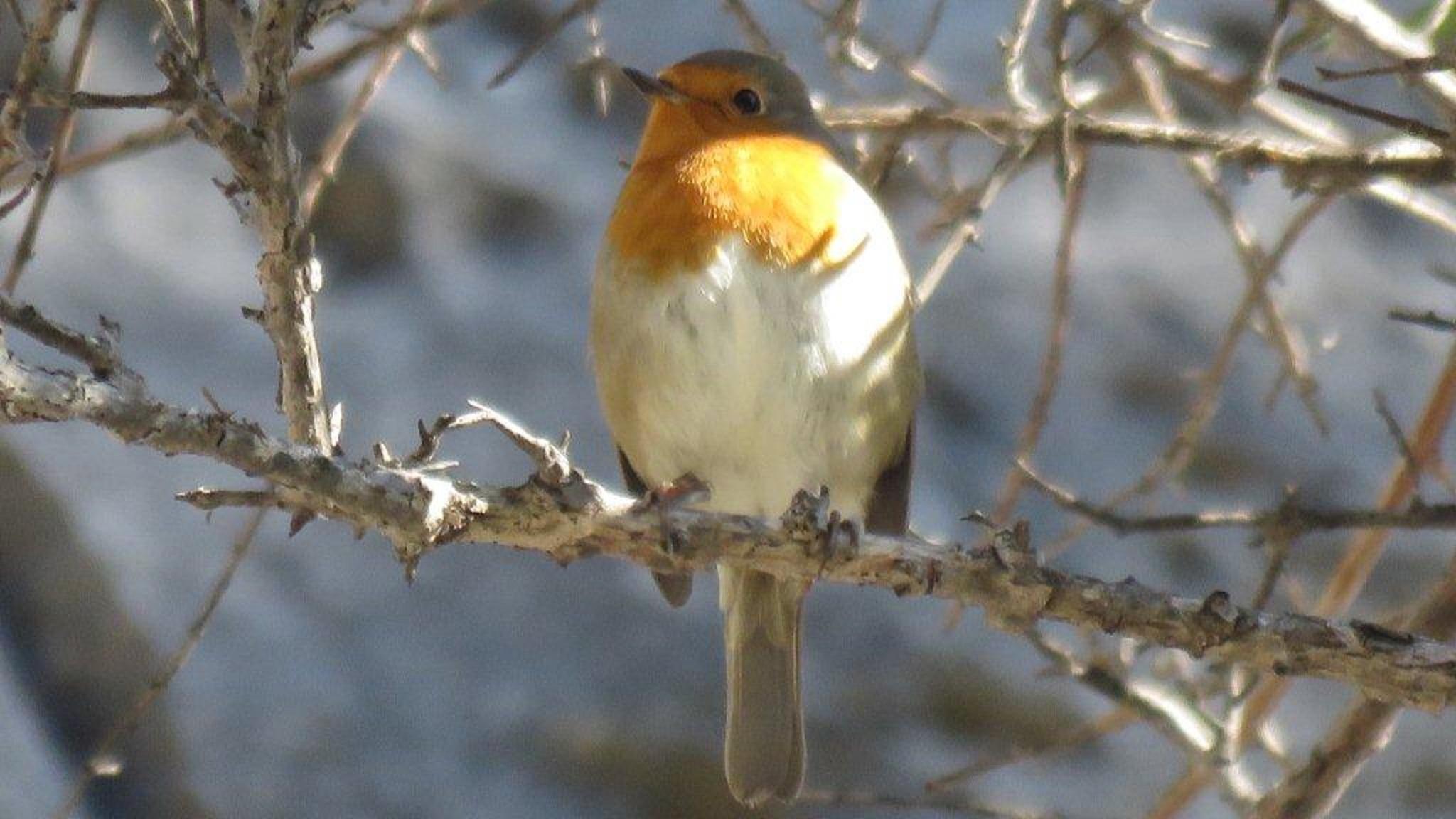 The characteristic Robin