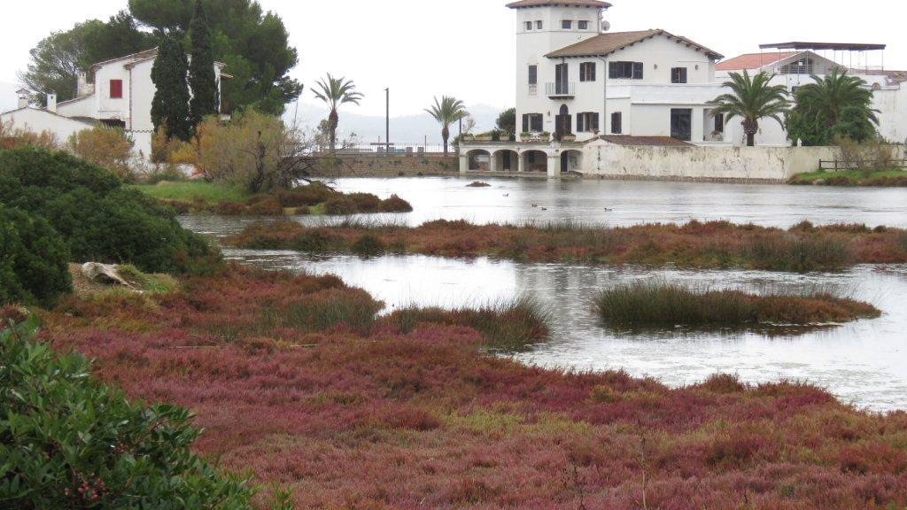 La Gola with Glasswort in bloom