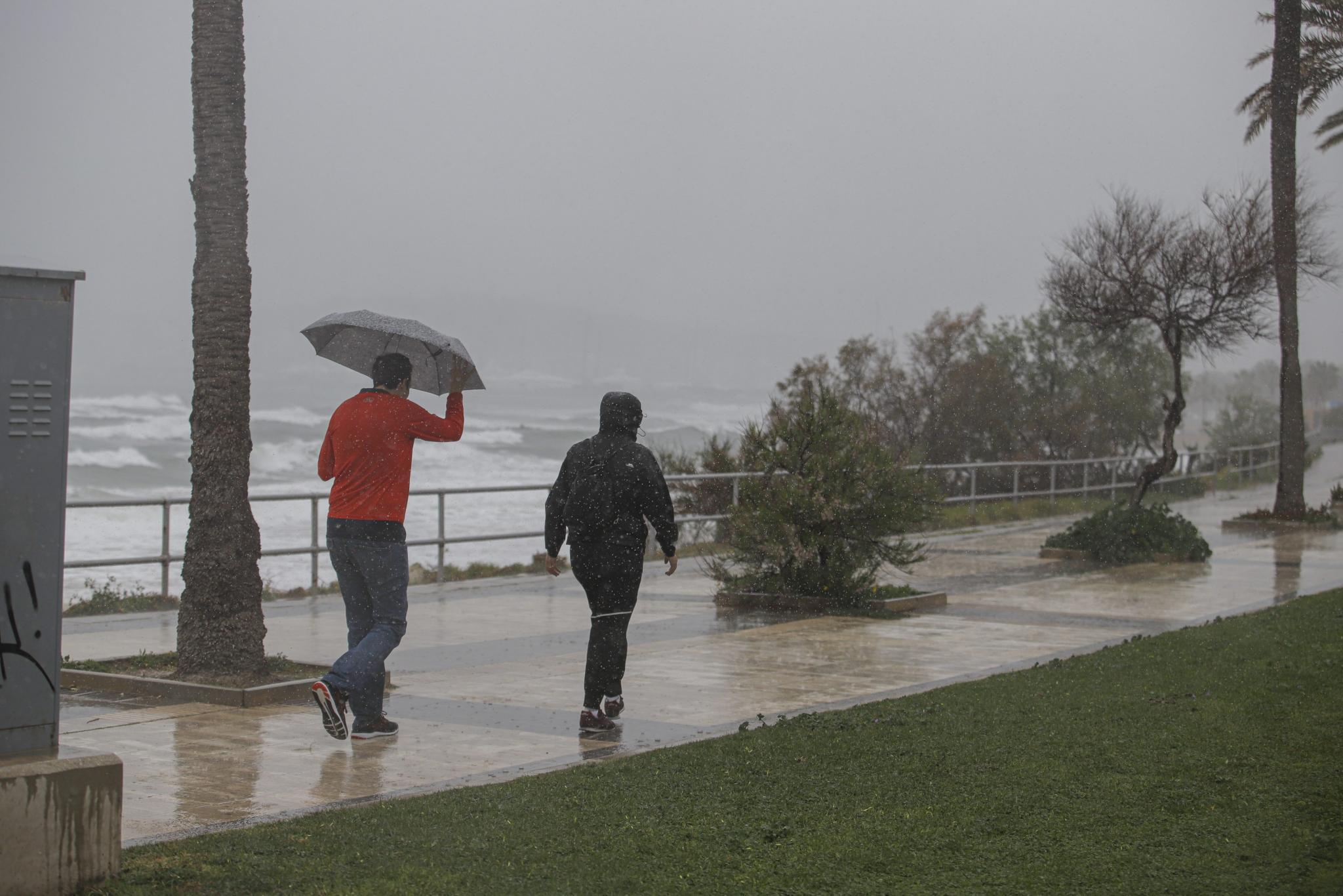 palma lluvia y viento en palma foto miquel a cañellas