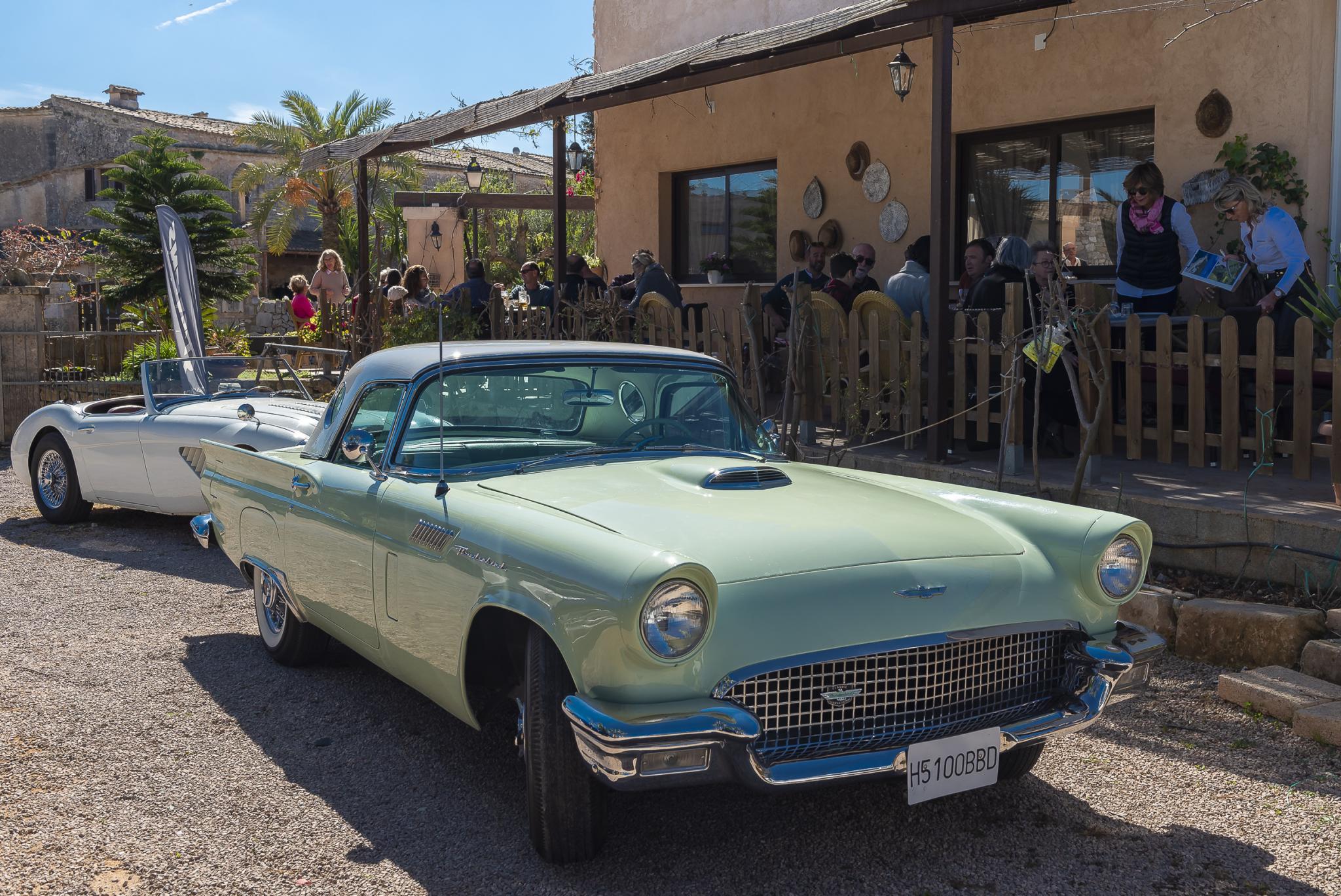 Ford Thunderbird and Austin Healey