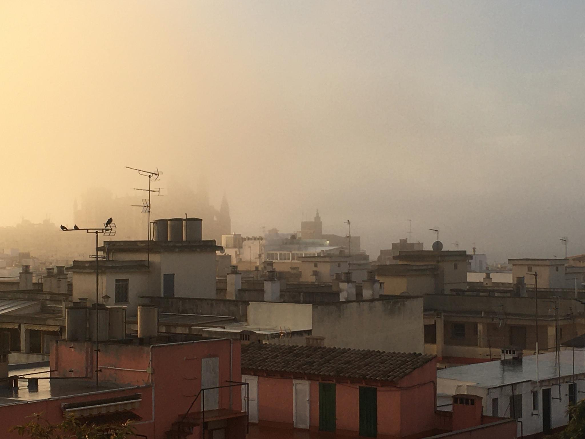 Palma Cathedral reappears as fog lifts.