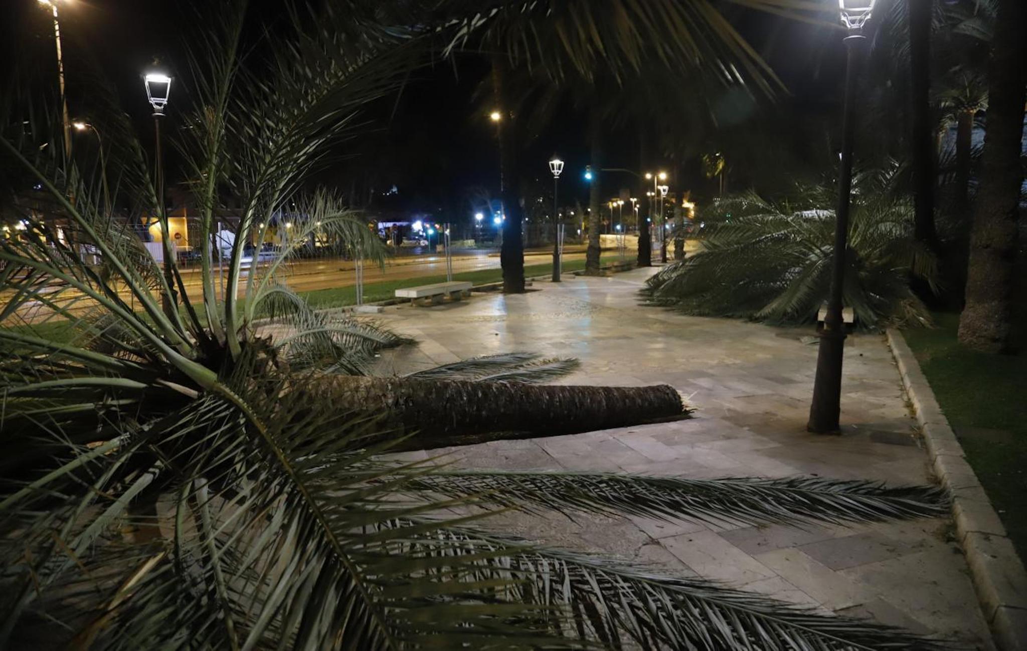 Storm damage in Passeig de Sagrera in Palma.