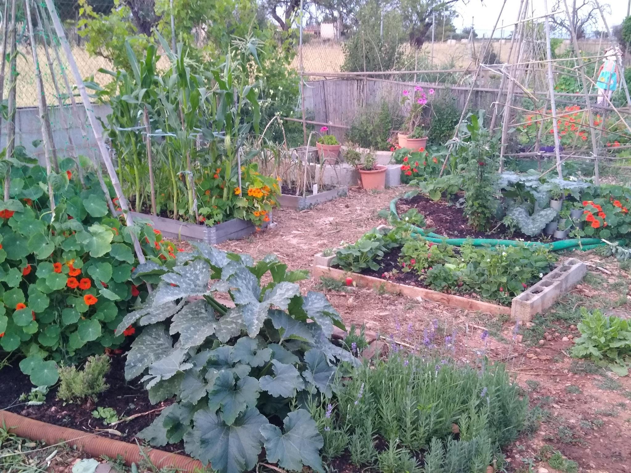 Part of the garden now