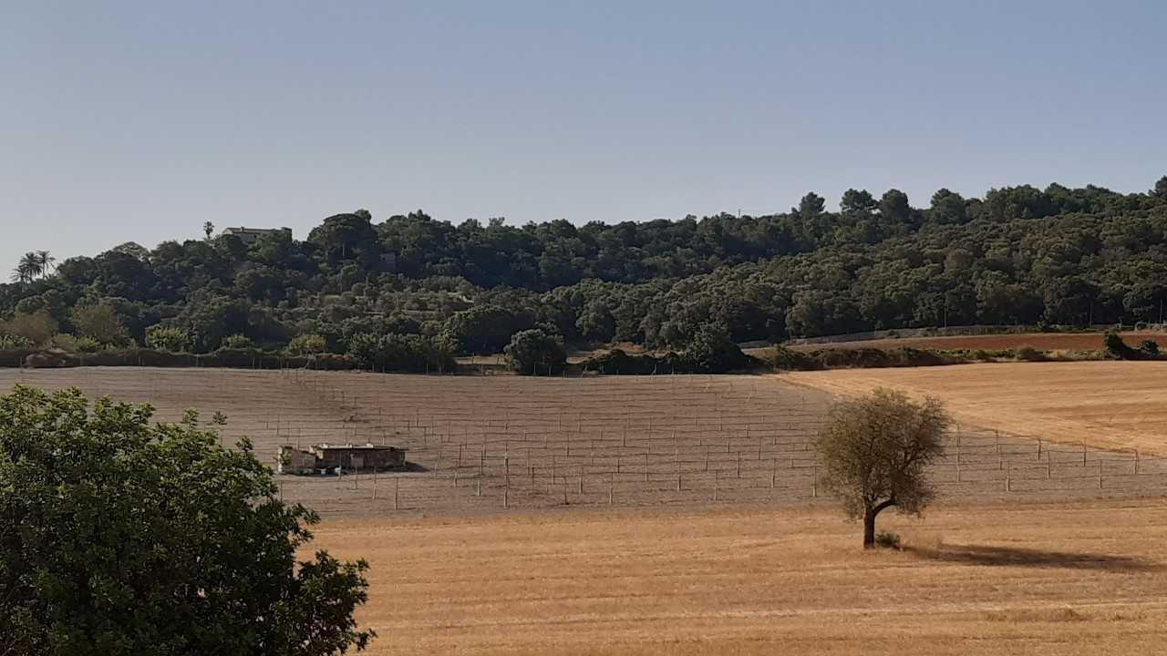 Deer invading farms in Majorca.