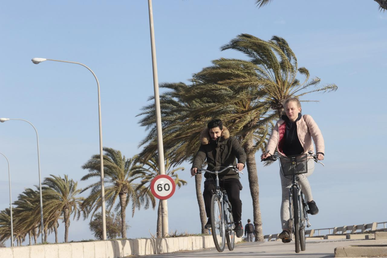 Cyclists in Palma.