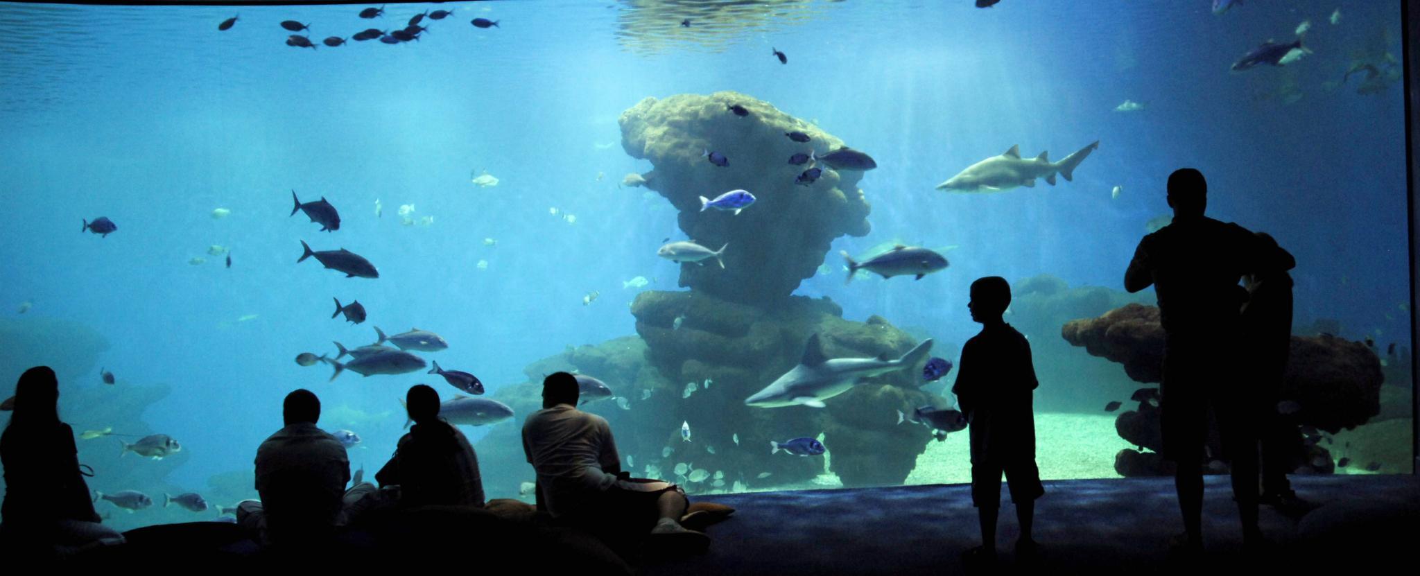PALMA. ACUARIO. Más de 100 niños disfrutan del campus de verano en el Palma Aquarium .