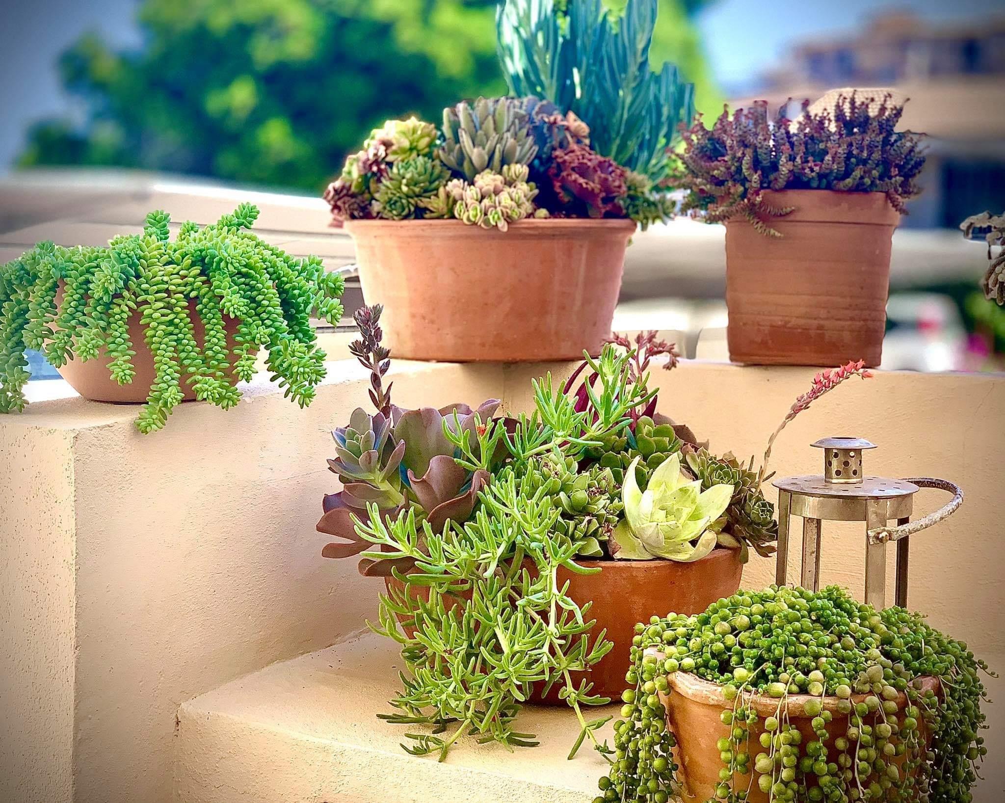 Beautiful pots of succulents