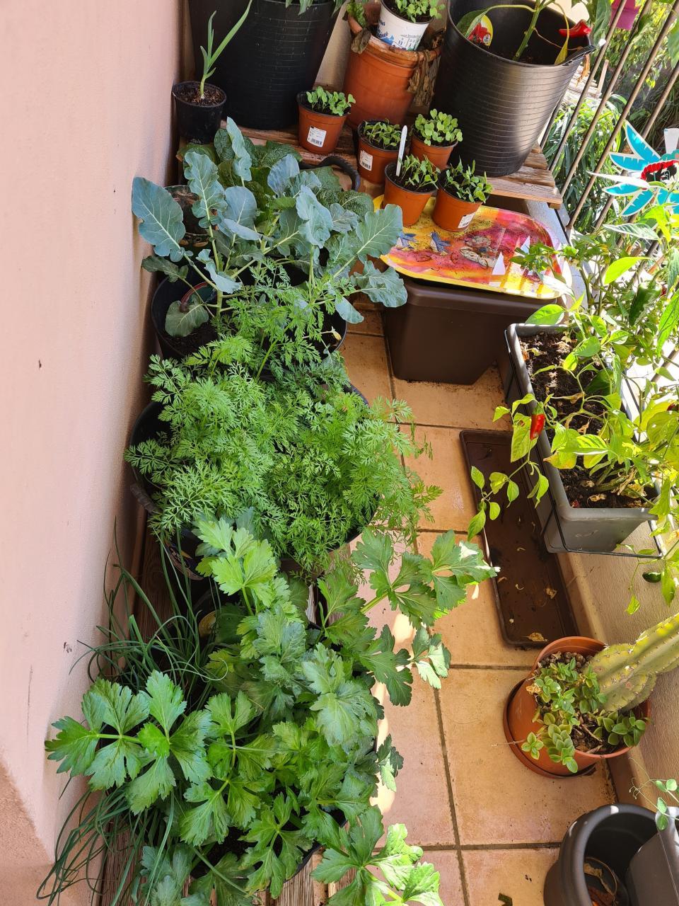 Linda's 'little garden'