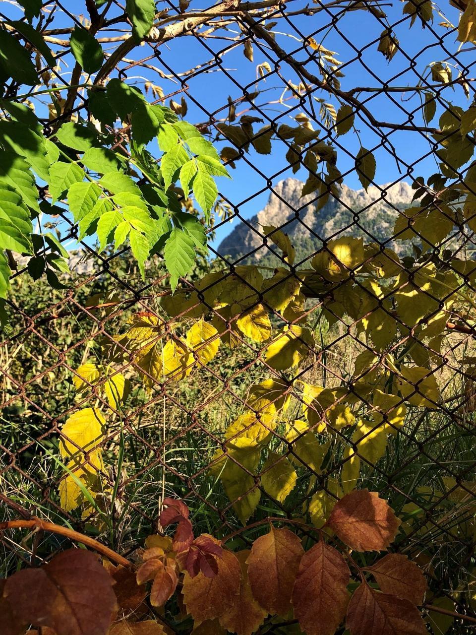 Fenced in Soller