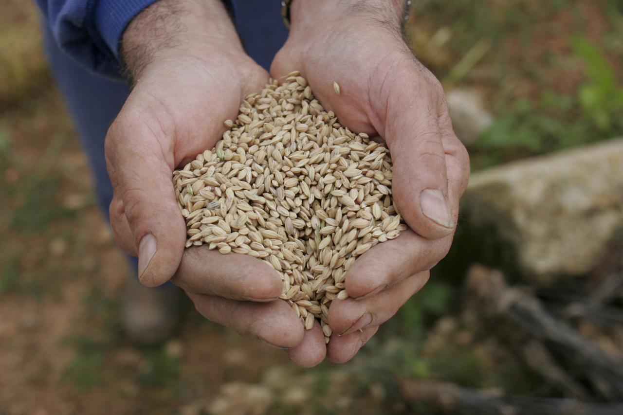 Rice from Sa Pobla