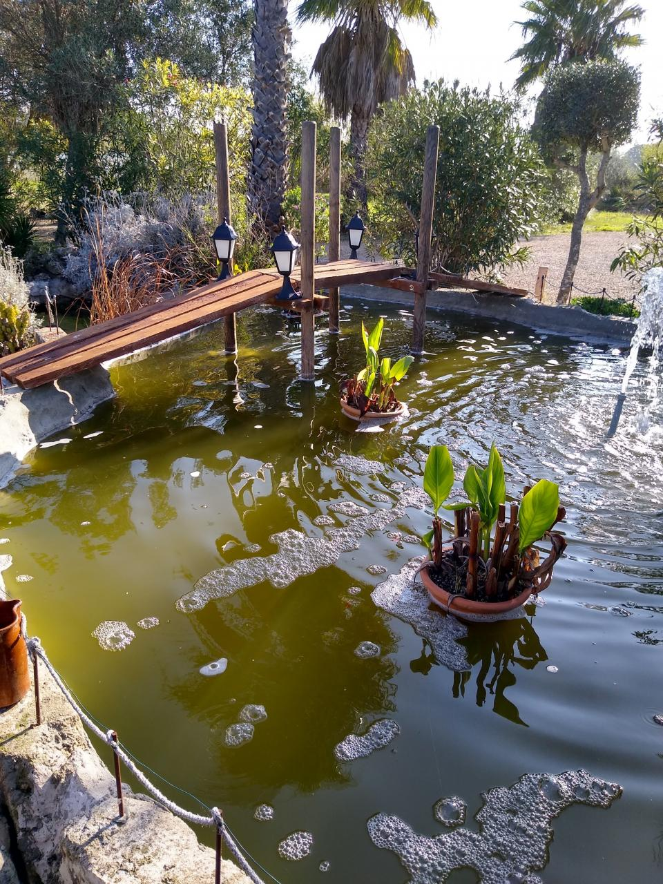 A labour of love pond