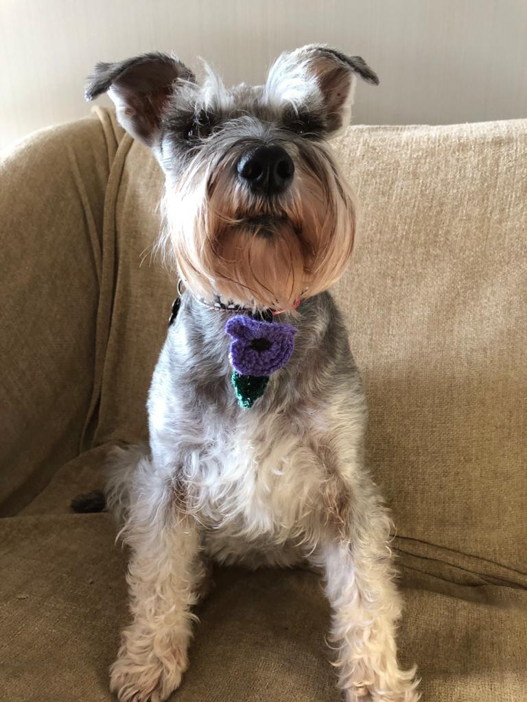 Pepper with his purple tie of remembrance