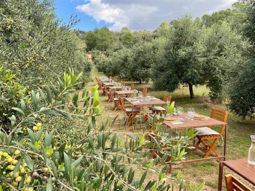 Tables amongst the trees on the farm.
