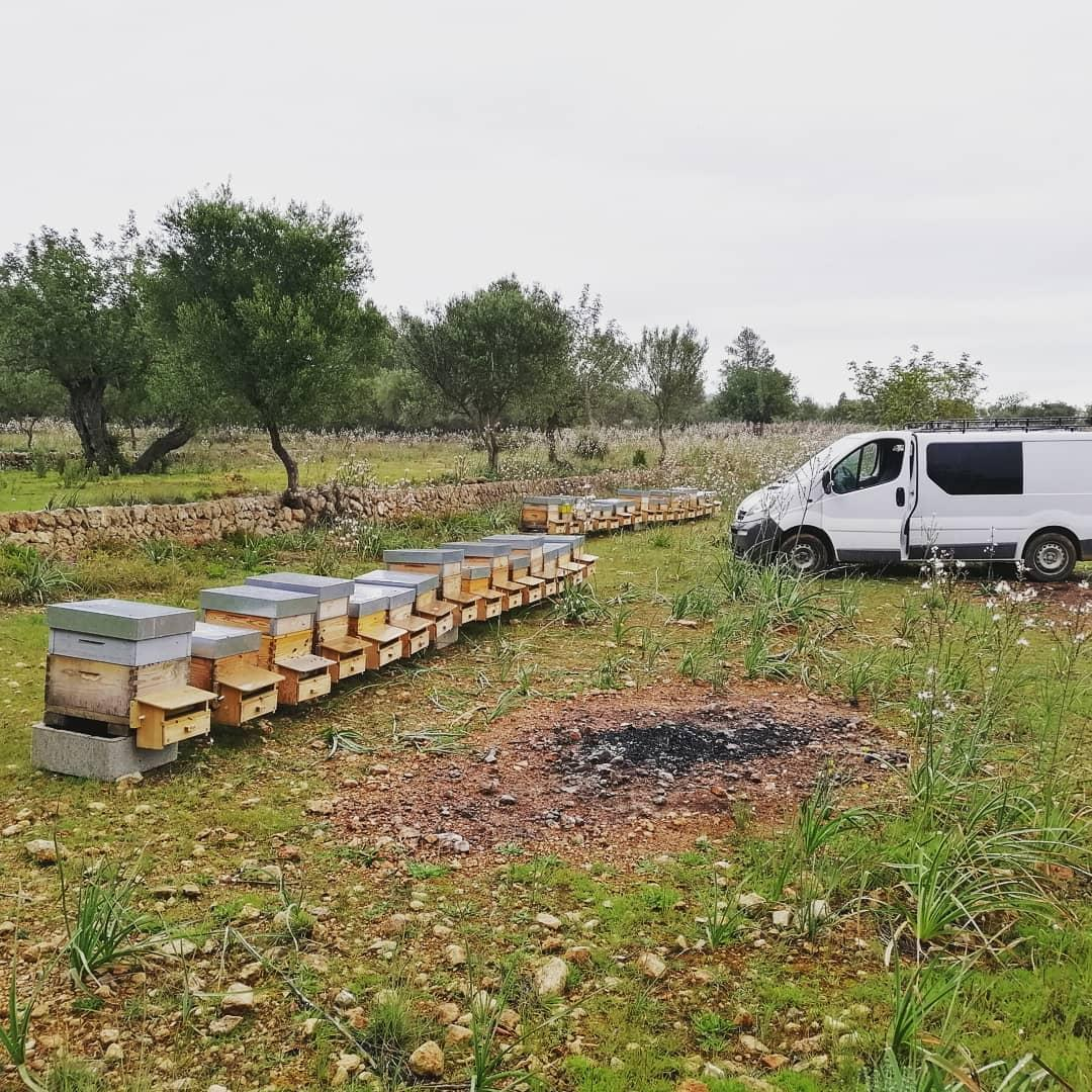 Bee hives in the countryside