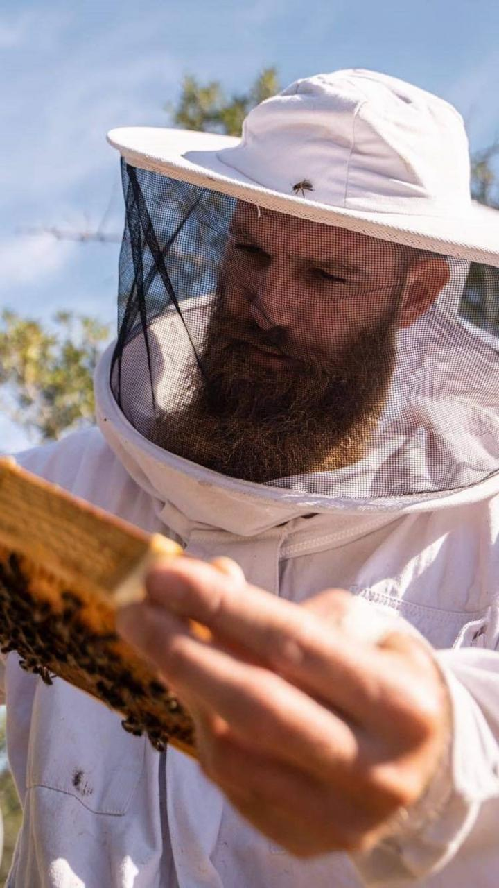 Pau Queralt checking the hives