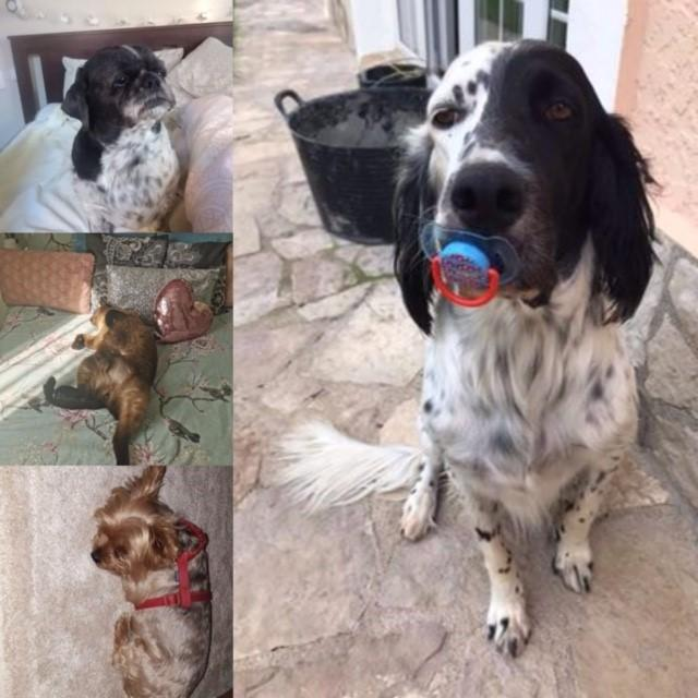 Chester (main) (B-T) Lana lucy Oliver and Olly