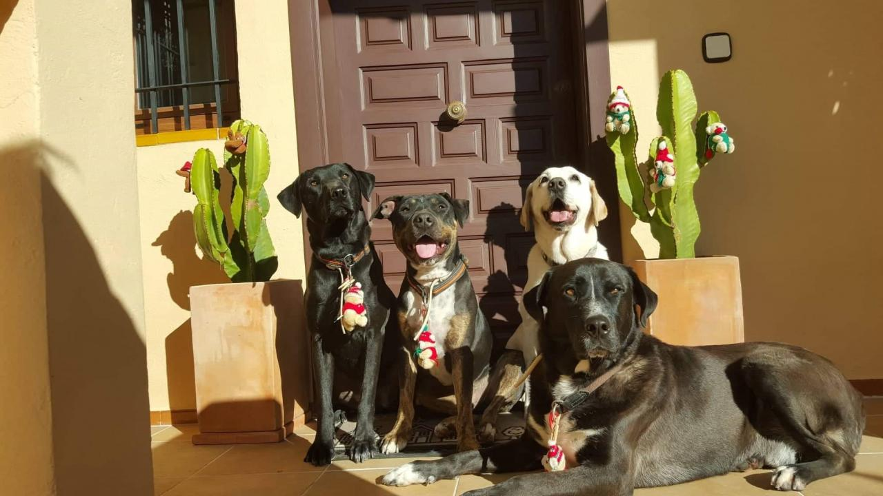(l-r)Gonzo, Conan, Macarena and Muffin