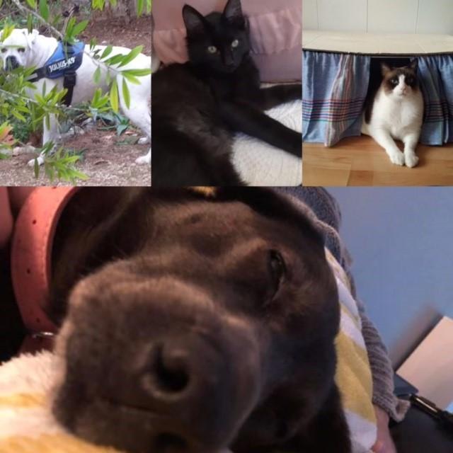 (l-R)Kasper, Basil, Buddy and Lillie (main)