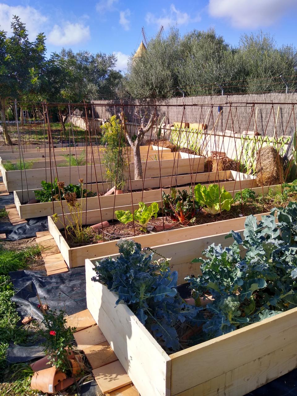 The new raised beds