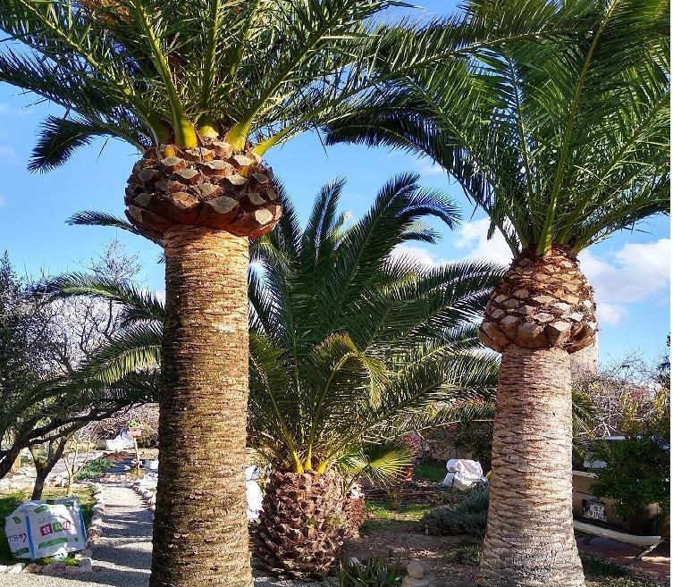 Impressive Palm Trees