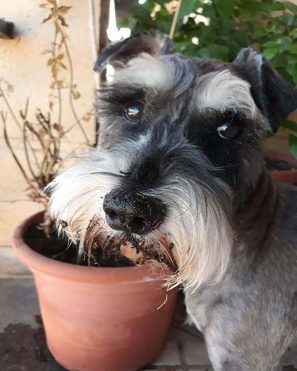 Guinness guarding a plant pot