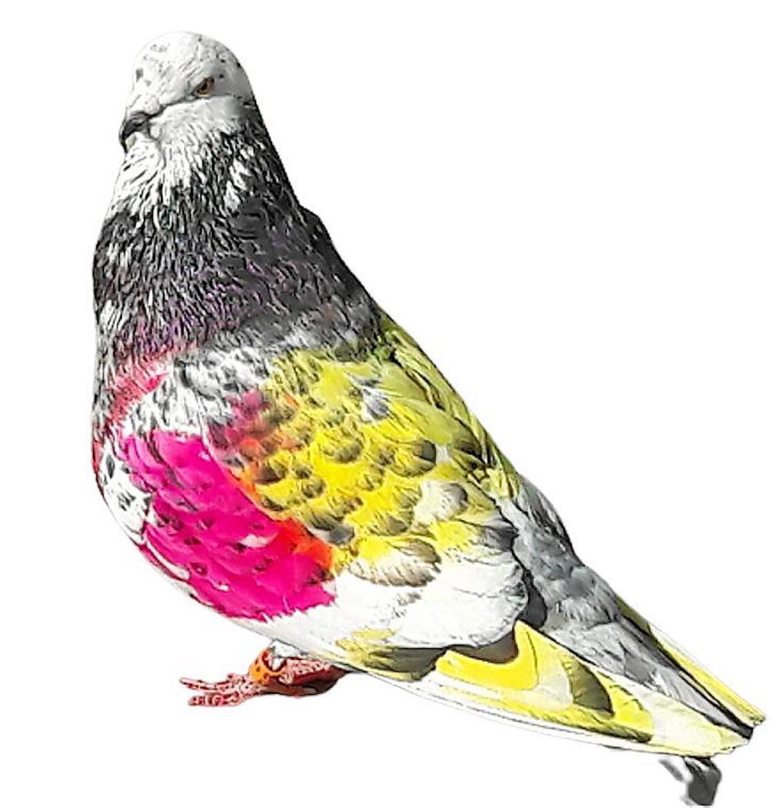 Painted pigeon.