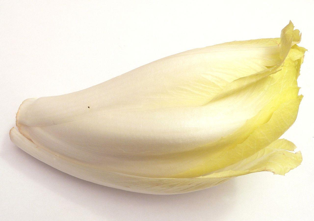 Cichorium endivis