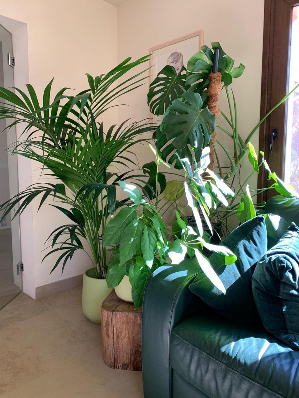 House Plants fed with worm tea