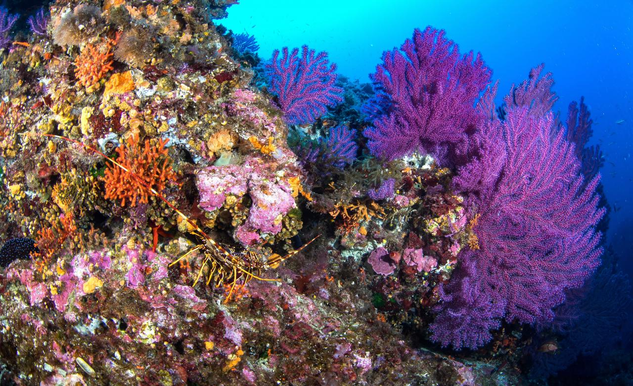 Biodiversity in The balearic Sea