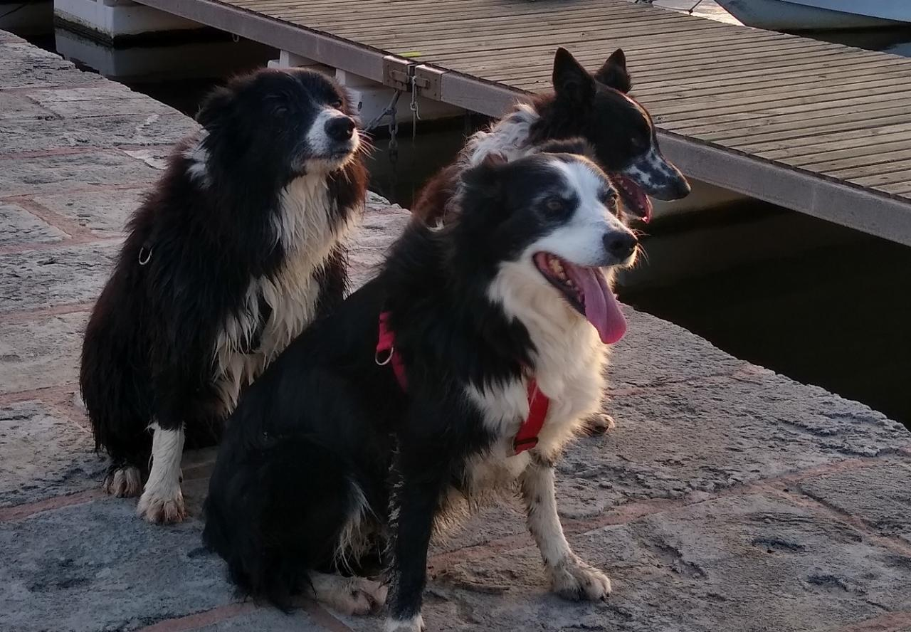 L-R Brady, Mollie and Sylvester
