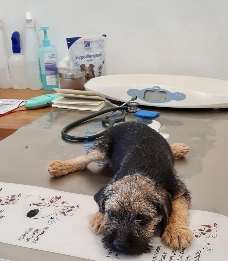 Barnes' very first vet trip
