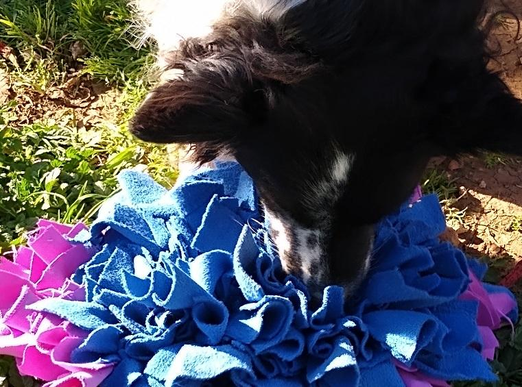 Sylvester using the snuffle mat