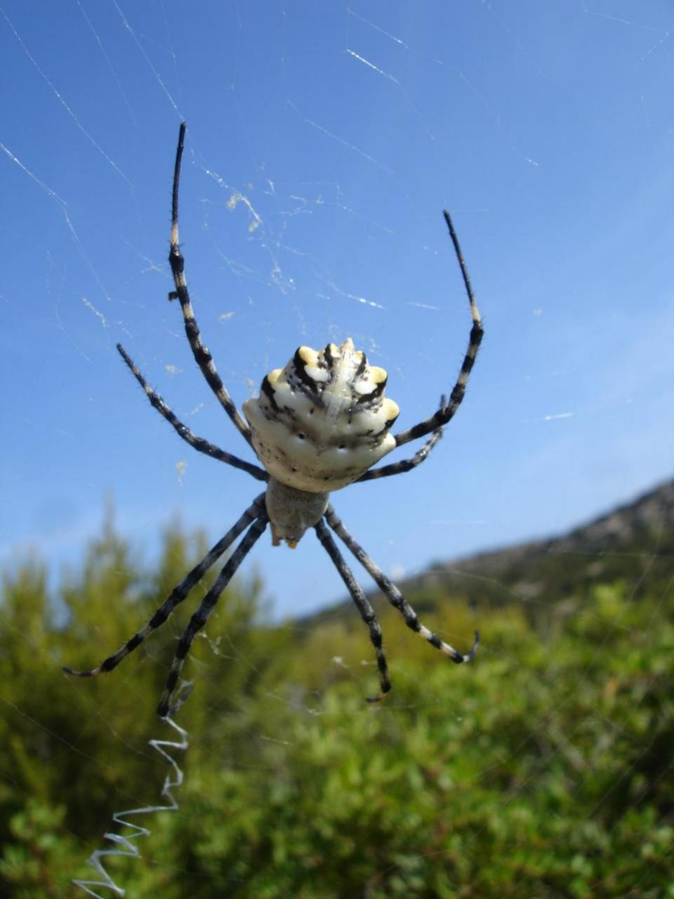 Spider in Es Vedrà Nature Reserve, Ibiza.