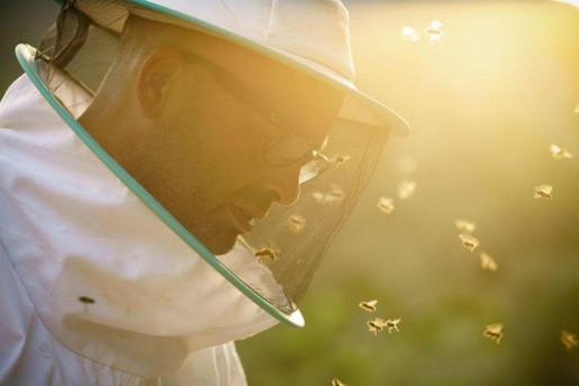 Martí Mascaró, Mallorcan Beekeeper.