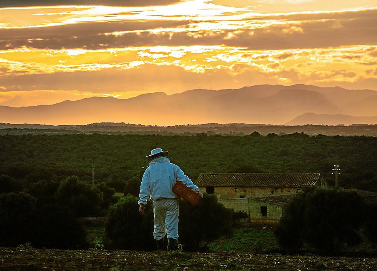 Martí Mascaró, Mallorcan Beekeeper at Ses Cabanasses.