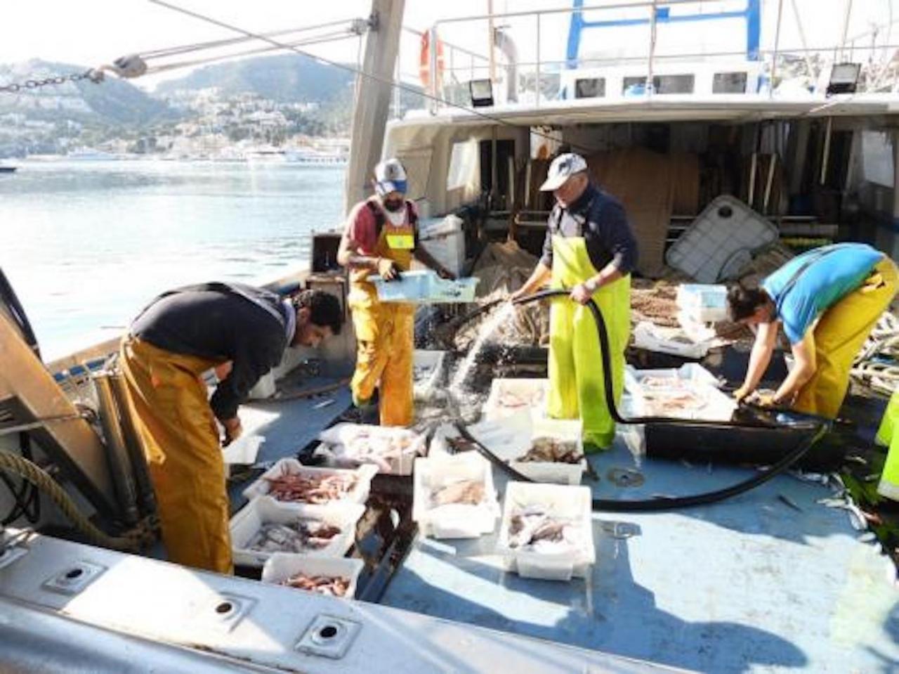 Fishermen in Palma bay.
