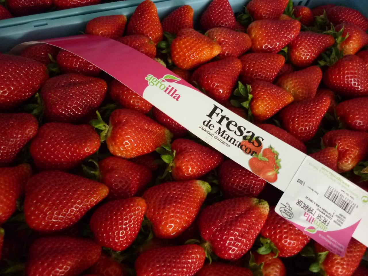 Strawberries from Manacor