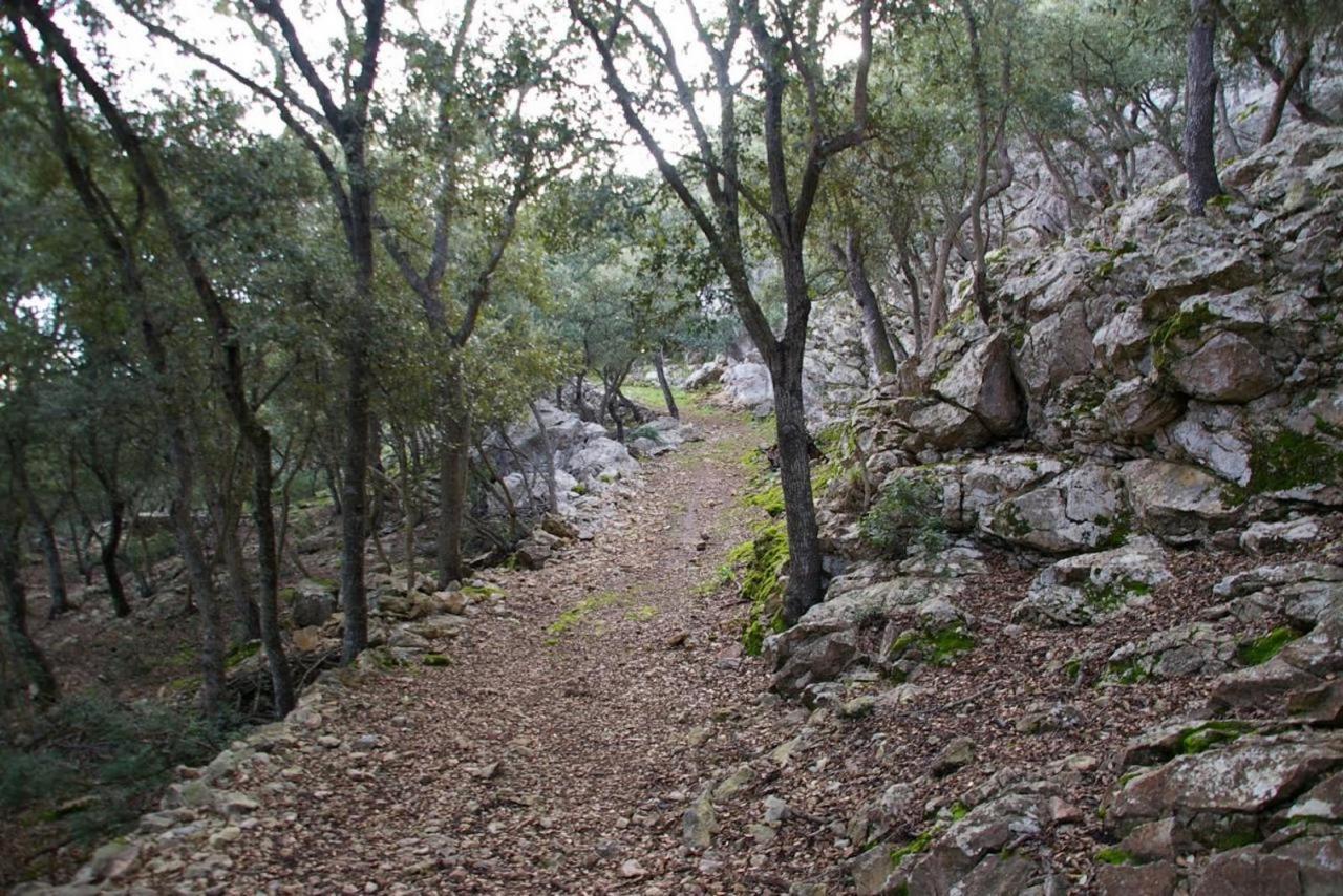 El bosque de Lluc, Mallorca.