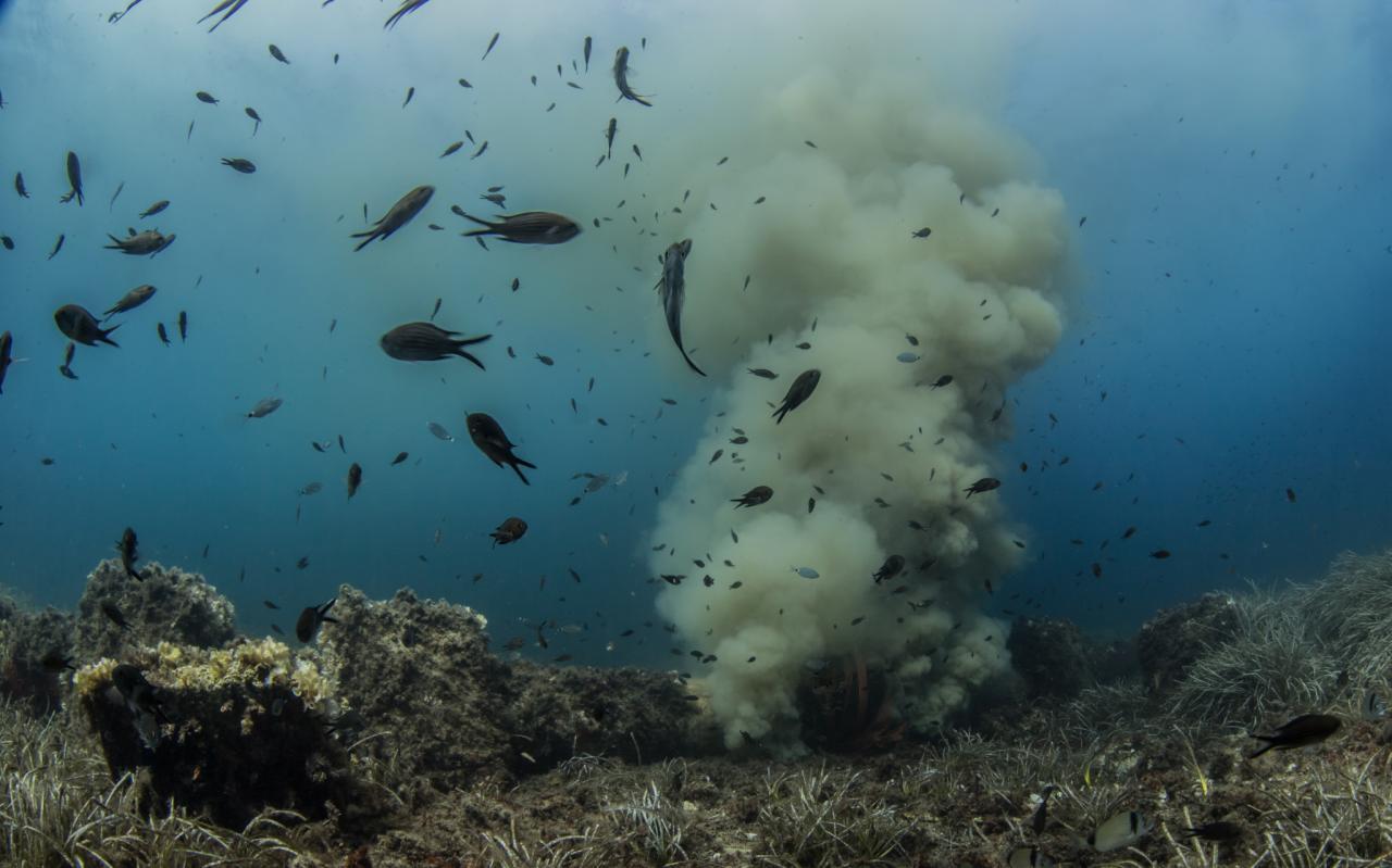 submarine outfall