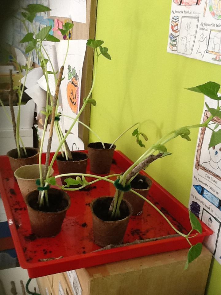 Queen's College growing plants