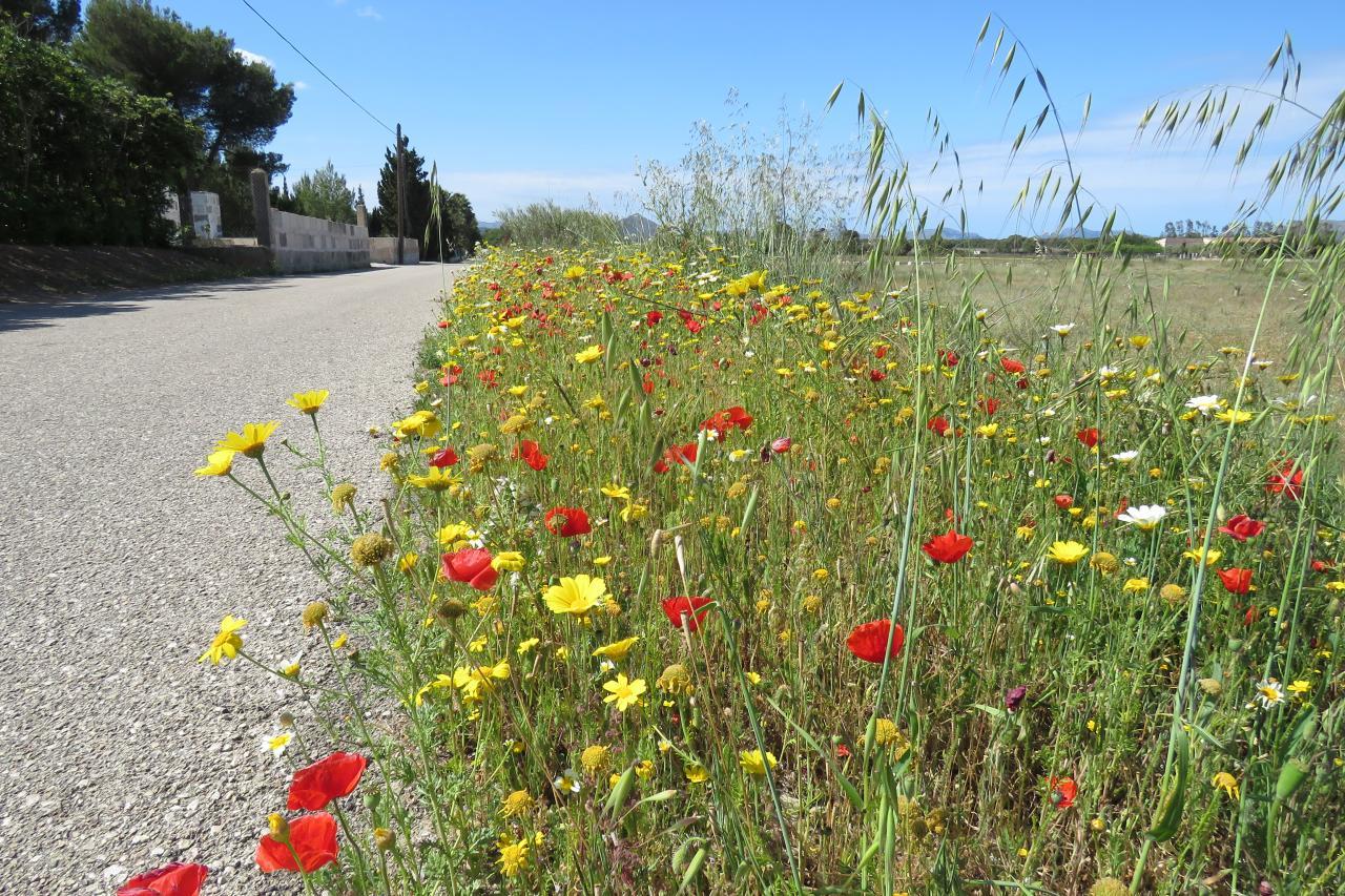 Typical Majorcan roadside
