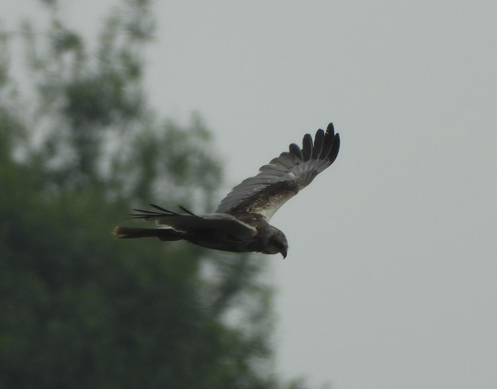 Male in flight