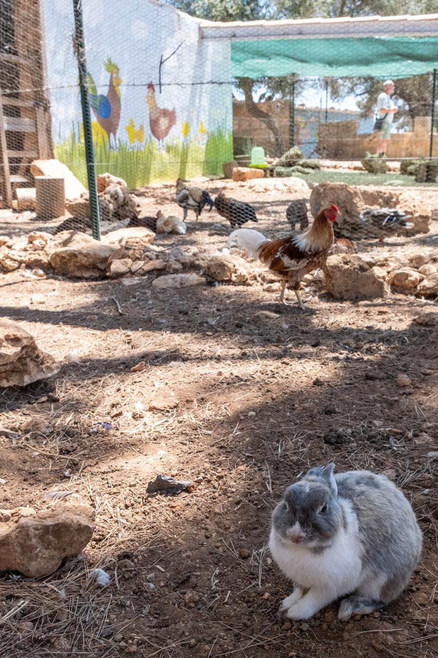 Fresopolis has an area for animals as well