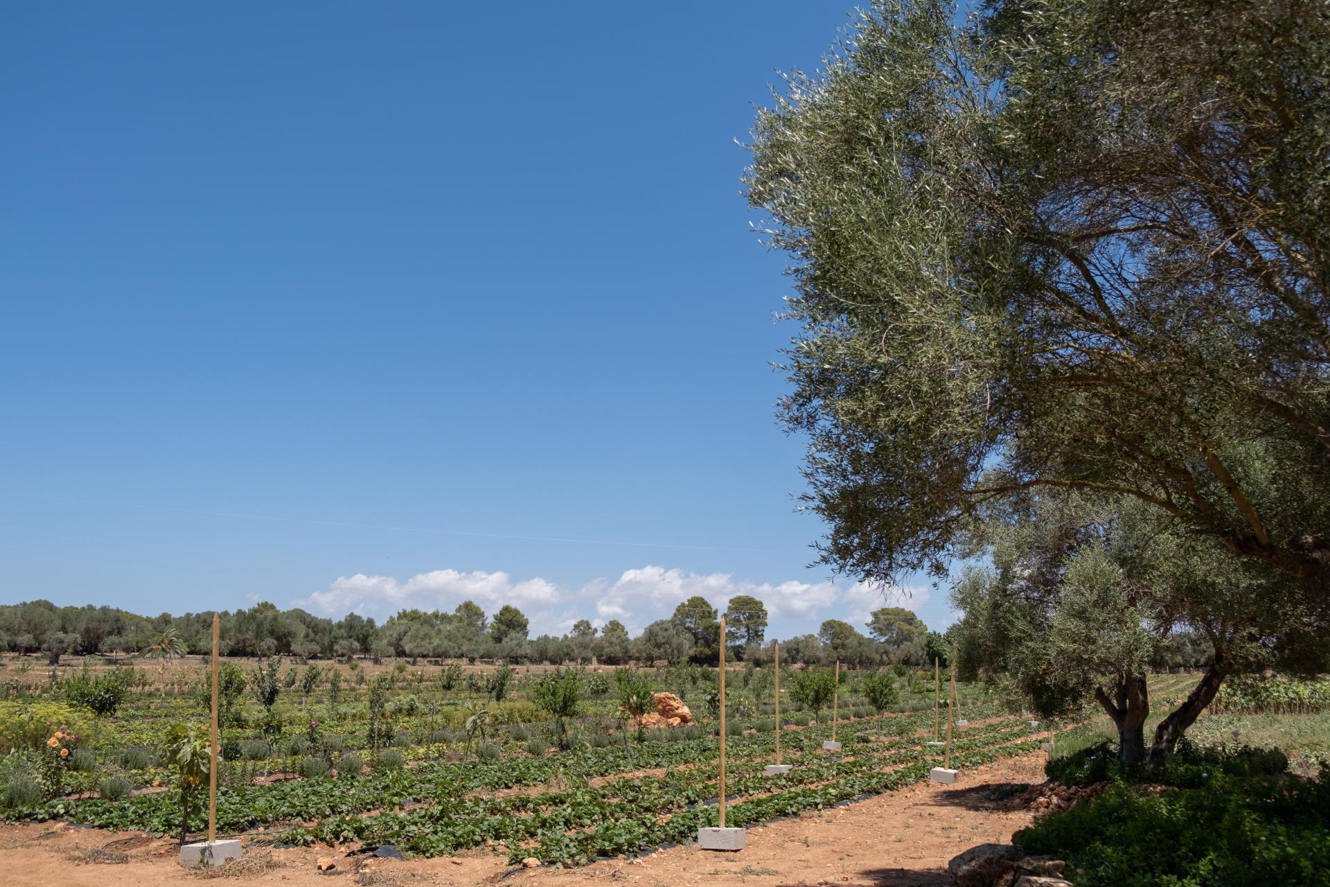 The Fresopolis gardens