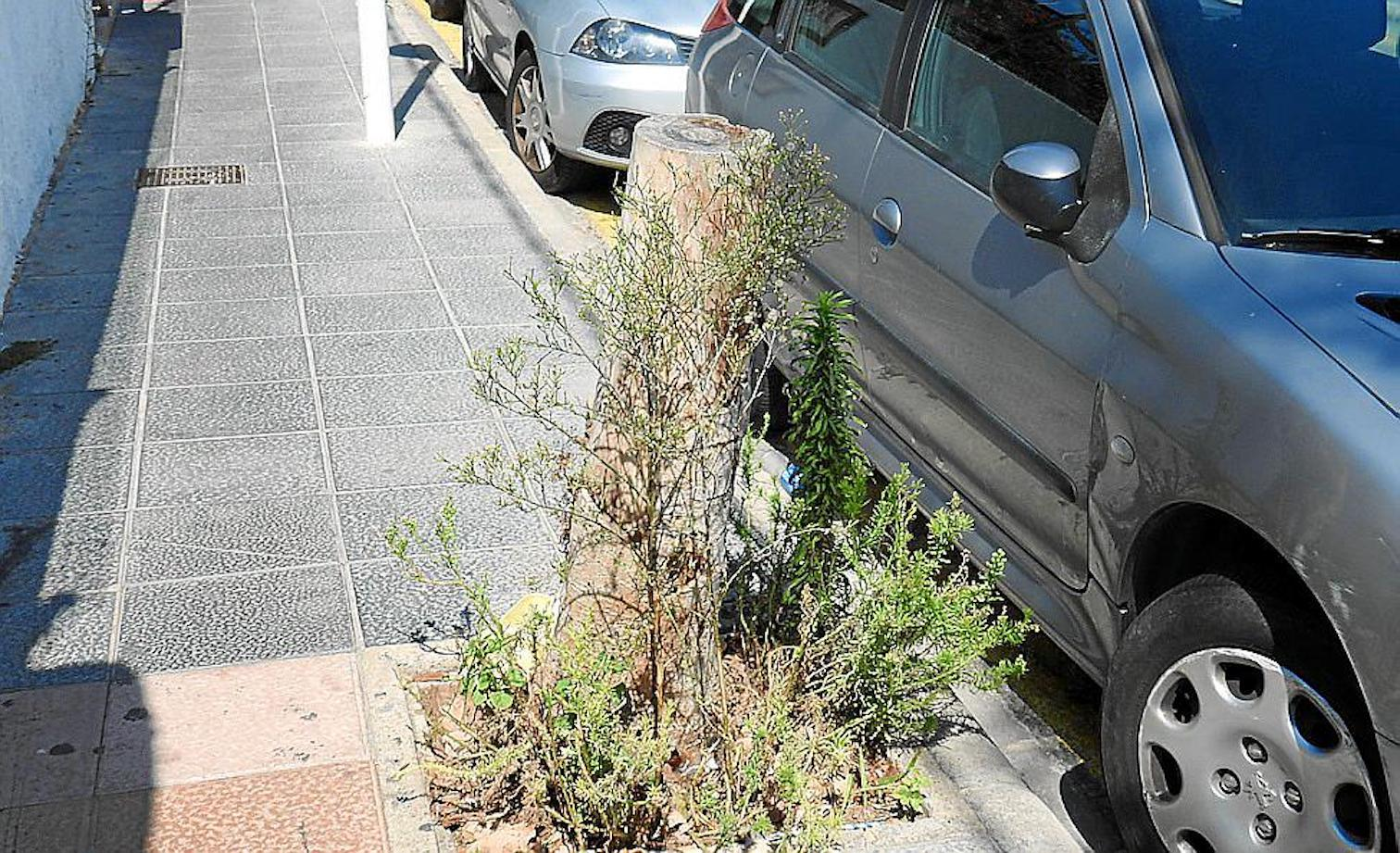 Weeds in Carrer Pinada, Magalluf.