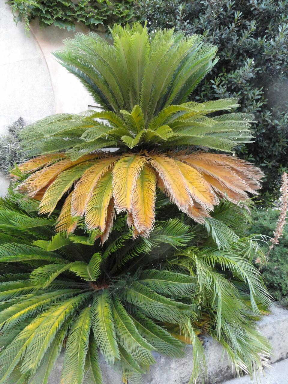 Palm three