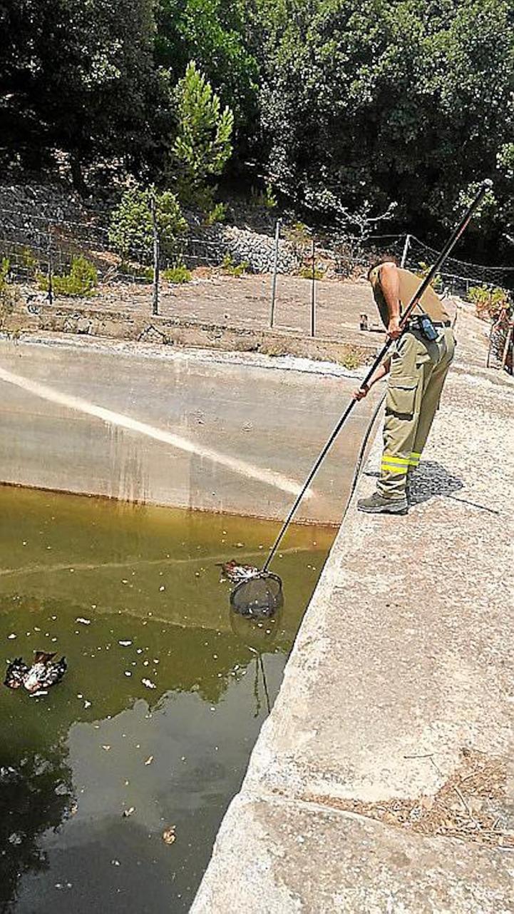 Dead birds in a pond in Mallorca.