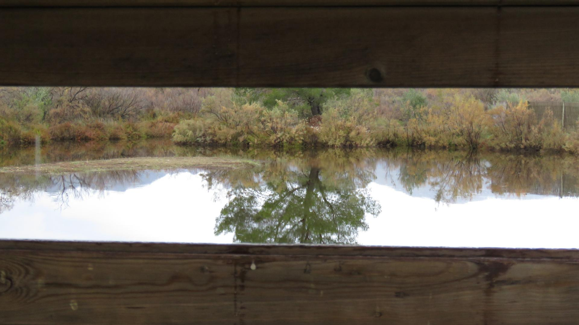 The view from the Can Curassa hide.